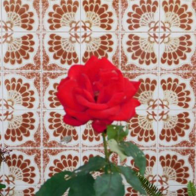 Lisbon Rose