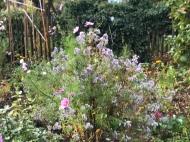 Roβtal Garden