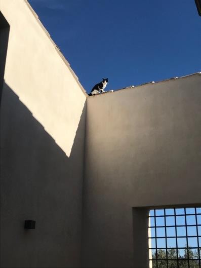 Cat at Baglio, Sicily