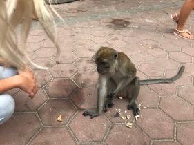 Eleanore Feeding a Monkey